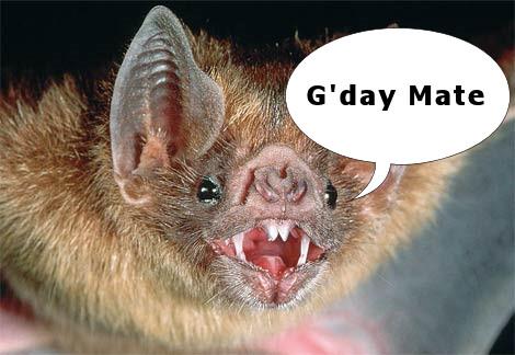 Aussie Bat